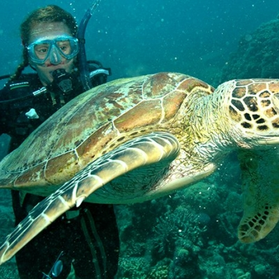 Turtle-and-snorkel-gall