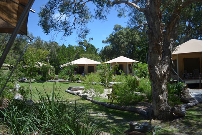 Glamp tents overlooking the Melaleuca trees at Castaways on Moreton Island